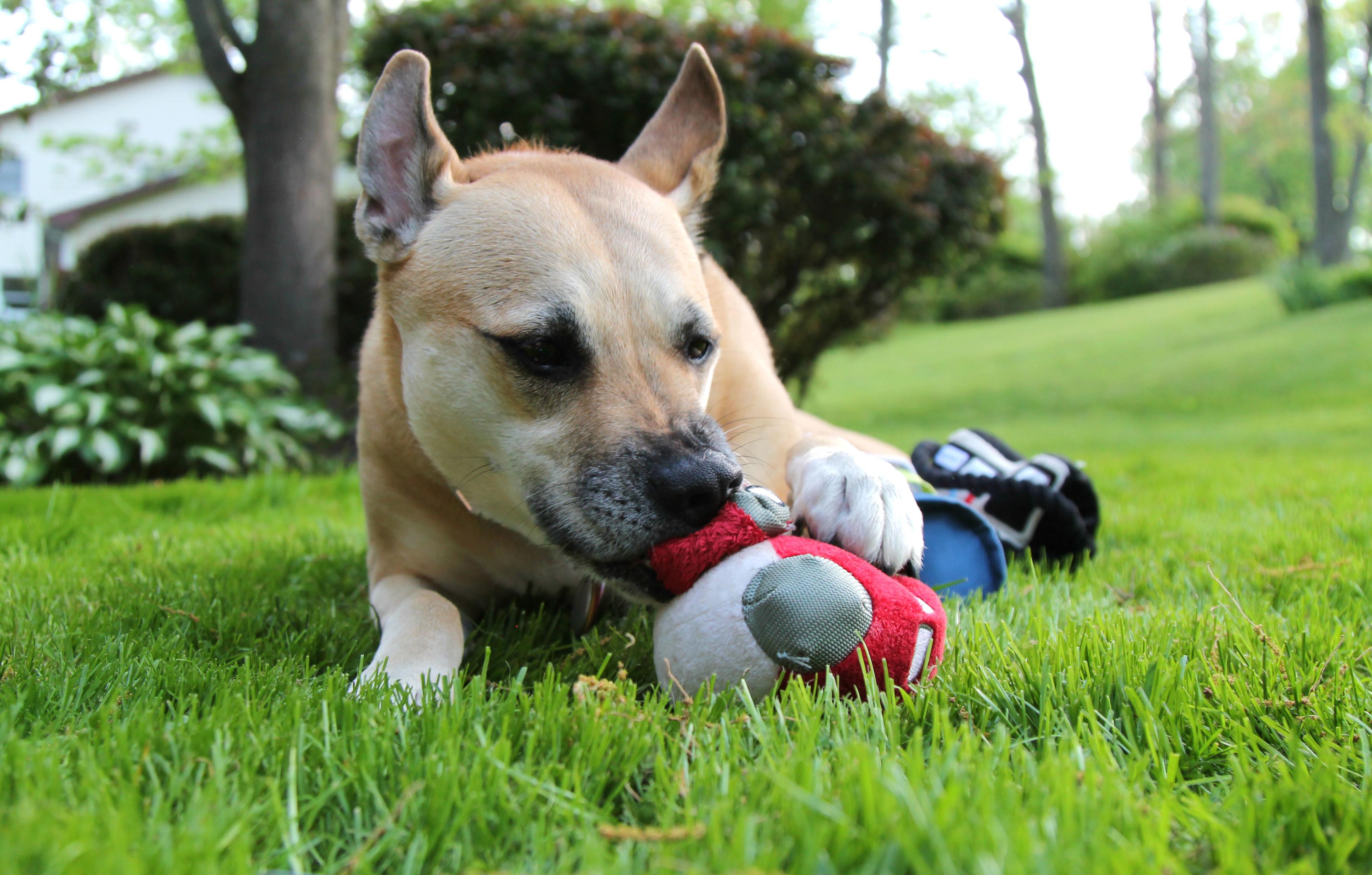 barkshop, aviation, plane, dog toy, love of aviation, plane dog toy, plane toy